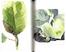 Libro Un giardino semplice. Storie di felici accoglienze e armoniose convivenze Paolo Pejrone 1