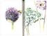 Libro Un giardino semplice. Storie di felici accoglienze e armoniose convivenze Paolo Pejrone 2