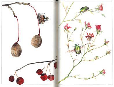 Libro Un giardino semplice. Storie di felici accoglienze e armoniose convivenze Paolo Pejrone 3