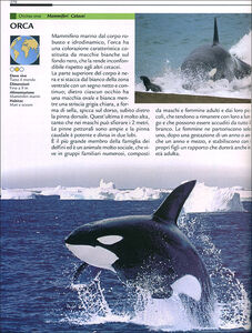 Libro Grande dizionario illustrato degli animali Emanuela Busà 1