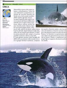 Libro Grande dizionario illustrato degli animali Emanuela Busà 3