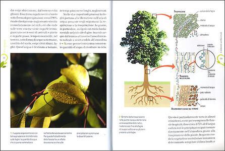 Ecologia - Guido Chelazzi,Giacomo Santini - 3