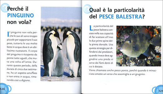 Libro Gli animali Mariagrazia Bertarini , Paolo Fabris , Elisa Prati 1