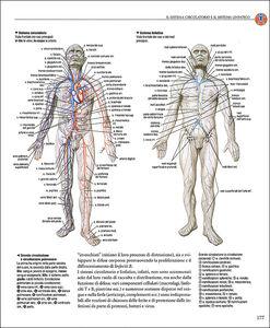 Libro Atlante di anatomia Adriana Rigutti 1