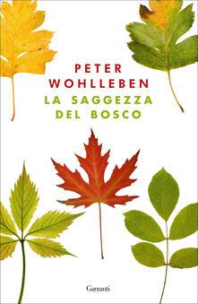 Ristorantezintonio.it La saggezza del bosco Image