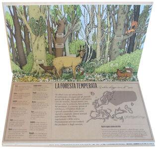 Libro Animalia. Viaggio animato nel mondo degli animali. Libro pop-up Arnaud Roi , Hélène Rajcak 1