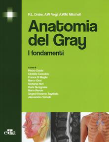 Lpgcsostenible.es Anatomia del Gray. I fondamenti Image