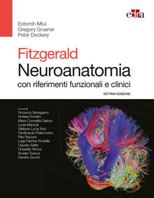 Aboutschuster.de Fitzgerald. Neuroanatomia con riferimenti funzionali e clinici Image