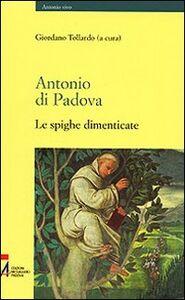 Antonio di Padova. Le spighe dimenticate