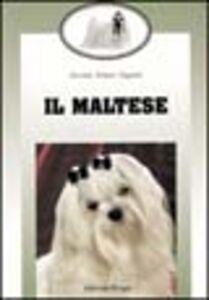 Libro Il maltese Giovanna Prosperi Gaggiotti