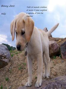 Milo - Bonny Zero - ebook