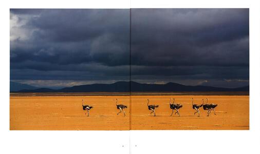 Luce e polvere. Immagini e storie dalle savane dell'Africa Orientale. Ediz. illustrata - Federico Veronesi - 2