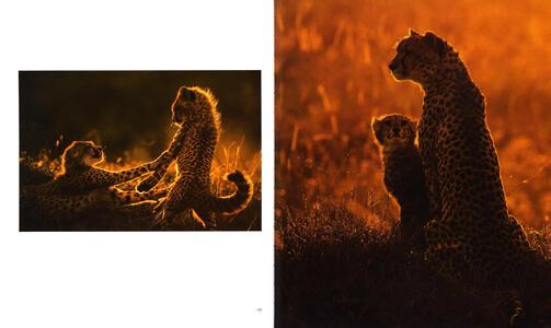 Luce e polvere. Immagini e storie dalle savane dell'Africa Orientale. Ediz. illustrata - Federico Veronesi - 3