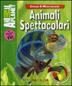 Libro Animali spettacolari Margaret McPhee 0