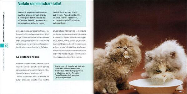 Foto Cover di Arriva un micio! Preparativi, attrezzatura, accoglienza, consigli, cure, Libro di Nicoletta Magno, edito da De Vecchi 1