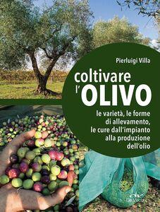 Libro Coltivare l'olivo. Le varietà, le forme di allevamento, le cure dall'impianto alla produzione dell'olio Pierluigi Villa