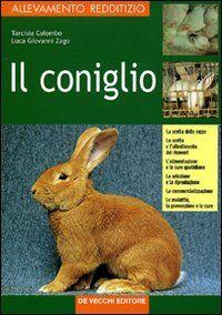 Il coniglio