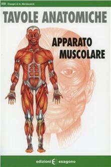 Winniearcher.com Apparato muscolare. Tavole anatomiche Image