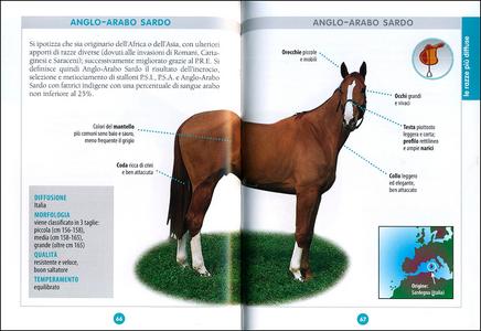 Libro Cavallo. Il manuale completo Ippolita Orsi 1