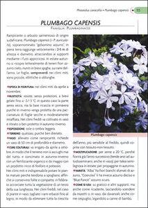 Libro Rampicanti. Cure colturali, generi e specie Margherita Lombardi 1