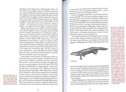 Il libro degli esseri a malapena immaginabili - Caspar Henderson - 3