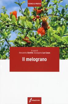 Radiospeed.it Il melograno Image