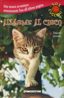 Radiosenisenews.it Allarme al circo. S.O.S. cuccioli Image