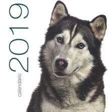 Amatigota.it Cani. Calendario da muro 2019 Image