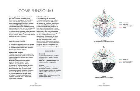 Terrarium. Mondi vegetali sotto vetro - Anna Bauer,Noam Levy - 4