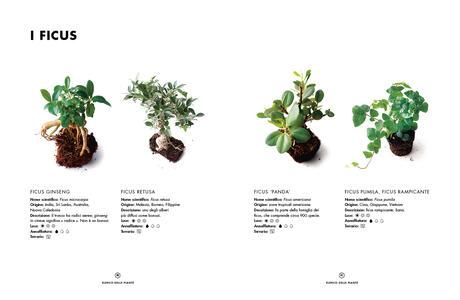 Terrarium. Mondi vegetali sotto vetro - Anna Bauer,Noam Levy - 5