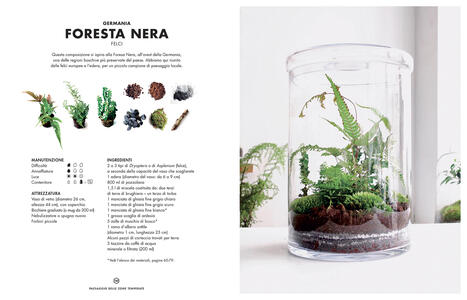 Terrarium. Mondi vegetali sotto vetro - Anna Bauer,Noam Levy - 9