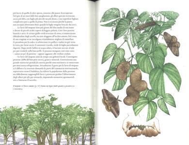 Il giro del mondo in 80 alberi - Jonathan Drori - 3