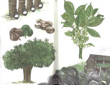 Il giro del mondo in 80 alberi - Jonathan Drori - 5
