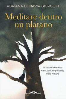 Antondemarirreguera.es Meditazioni dentro un platano Image