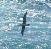 Viaggi di un giovane albatros