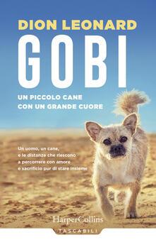 Lpgcsostenible.es Gobi. Un piccolo cane con un grande cuore Image