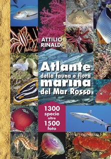 Atlante della fauna e flora marina del Mar Rosso. Ediz. illustrata - Attilio Rinaldi - copertina