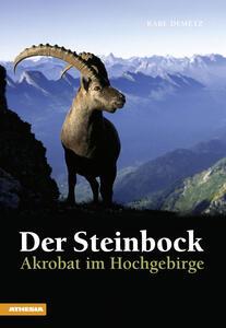 Der Steinbock Akrobat im Hochgebirge