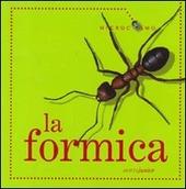 La formica