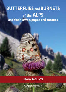 Associazionelabirinto.it Butterflies and burnets of the Alps and their larvae, pupae and cocoons Image