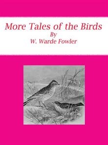 More tales of the birds