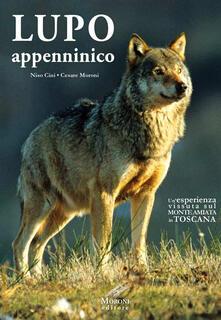 Capturtokyoedition.it Lupo appenninico. Un'esperienza vissuta sul Monte Amiata in Toscana Image