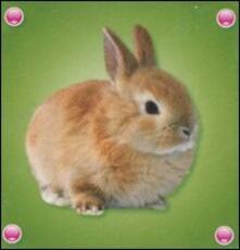 Il coniglio.pdf